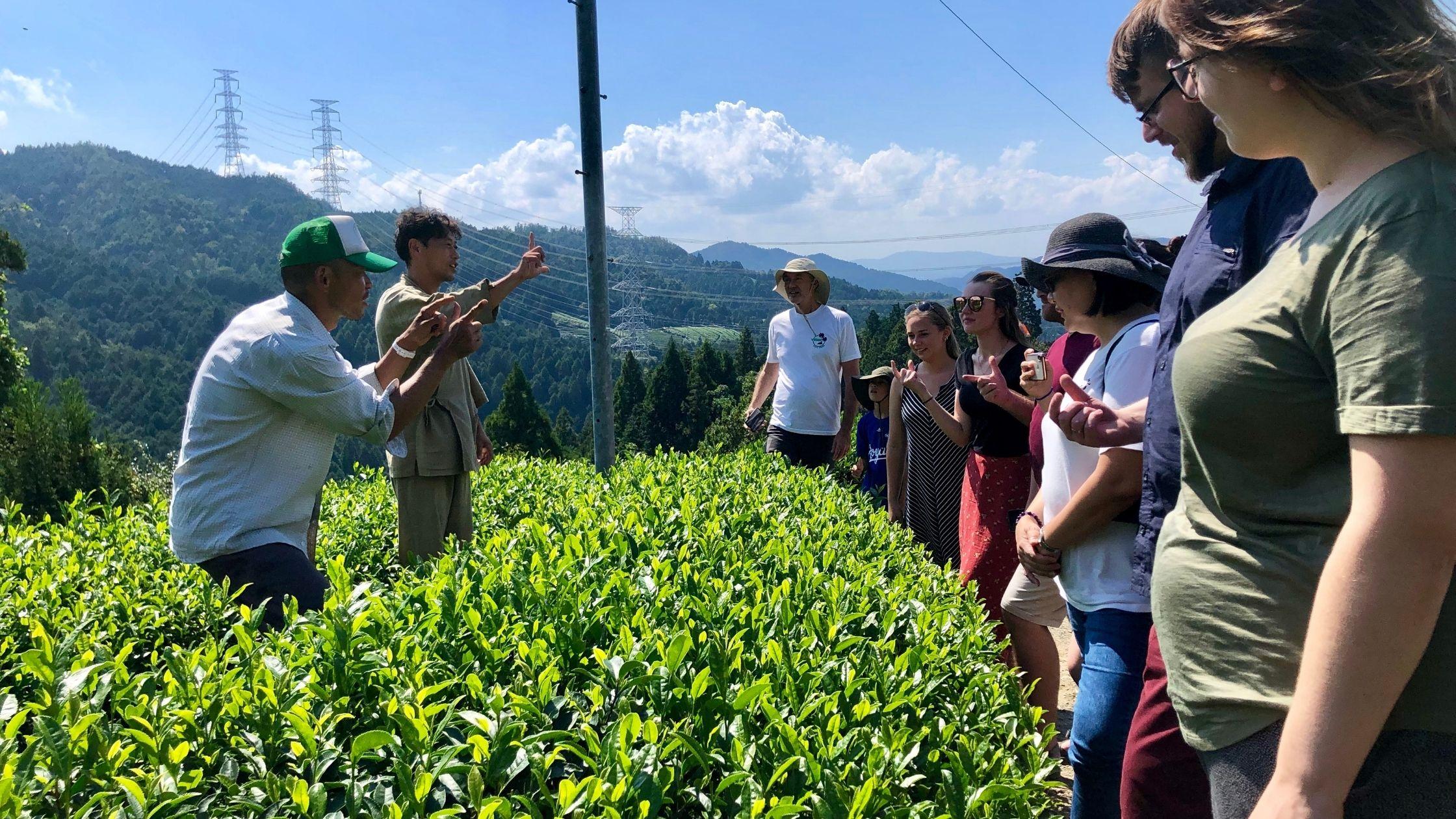Tea Tour | 茶畑ツアー